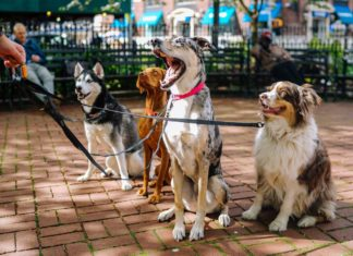 Easy-Walk-Harness-5-Ways-They-Help-Your-Puppy-on-readcampus